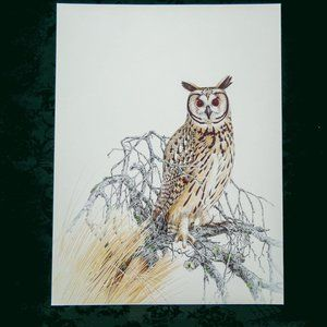 Vintage 1981 Striped Owl Wildlife Print DDL160